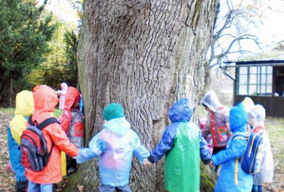 Aktivity lesní pedagogiky